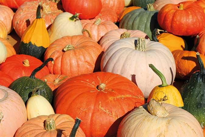 Pumpkin Party im American Heritage München