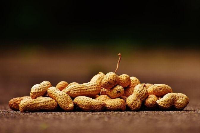 Erdnüsse für Erdnussbutter