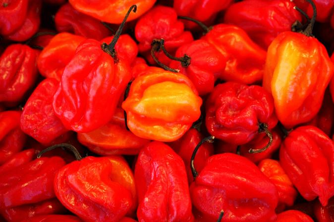 Habanero Chili für scharfe Sauce